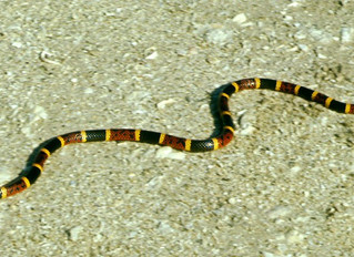 Deadly Plants and Animals in the Florida Keys