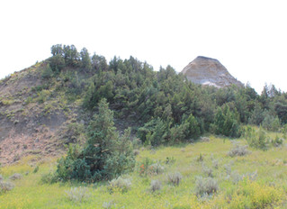 101 Travel Bits: Theodore Roosevelt National Park - Coal Vein Nature Trail