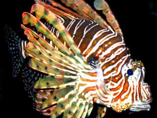 101 Travel Bits: Everglades National Park - Lionfish