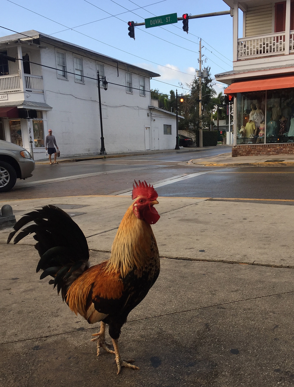 Rooster at the corner of Duval and Truman