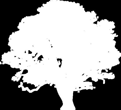 arbre blanc.png