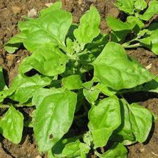 Tétragone (épinard d'été)