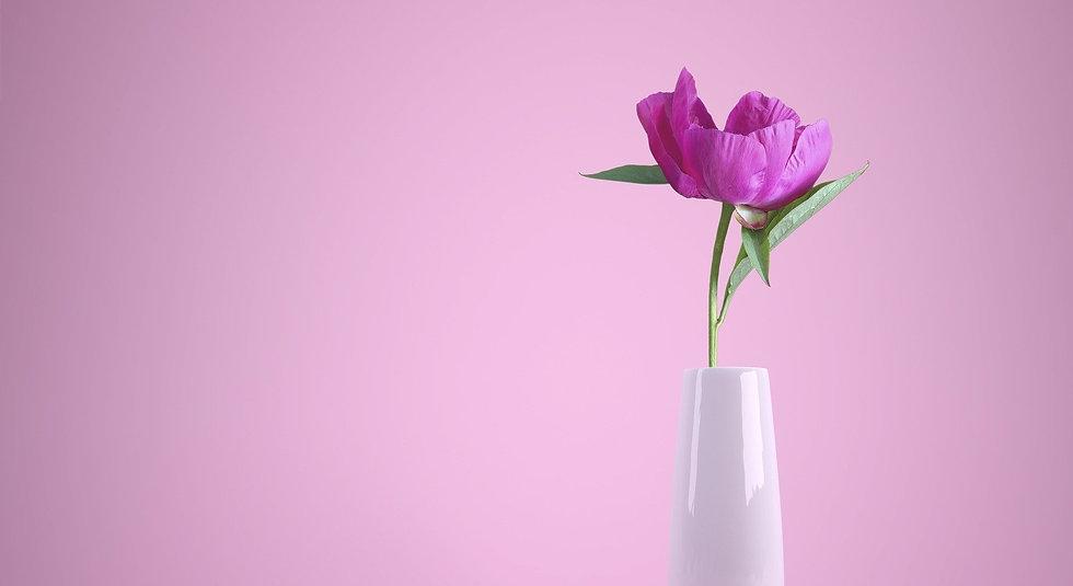 flower-3175428_1920_edited.jpg
