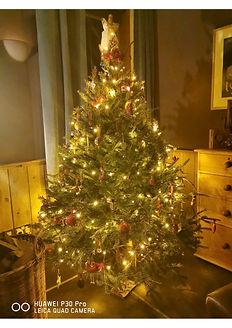 tree 1 101220.jpg