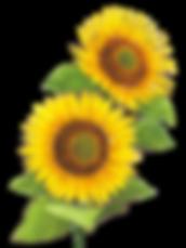 大阪府,関西,花屋,花,胡蝶蘭,スタンド花