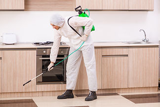 Professional contractor doing pest contr