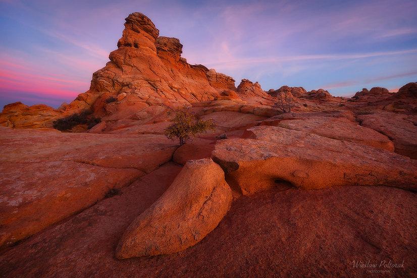 Coyote's Sandstone
