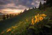 Balsamroots Ridge