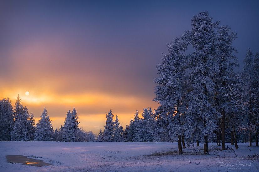 Frosty Forest, Alberta