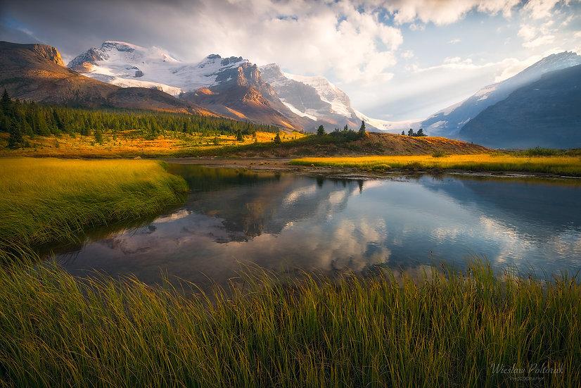 Gold Rash, Jasper National Park