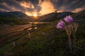 Prairie Crocus - Spring in the valley