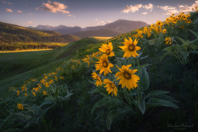 Alberta Foothills at Bloom