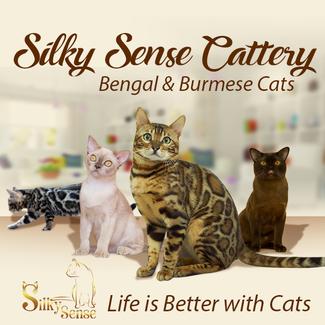 GR*Silky Sense Cattery