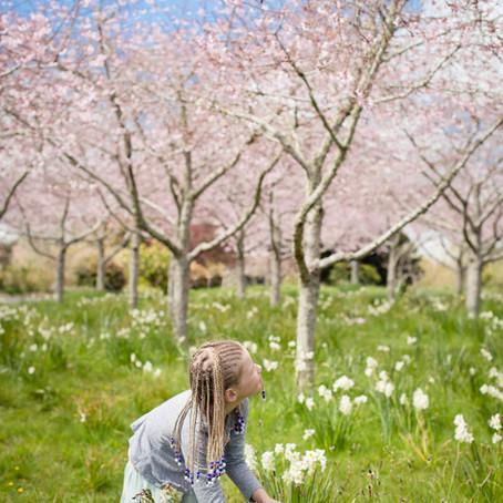 Snapshots of Spring