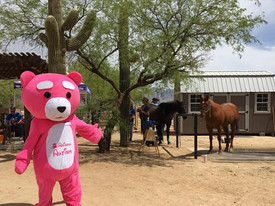 Elopie posing with the horses