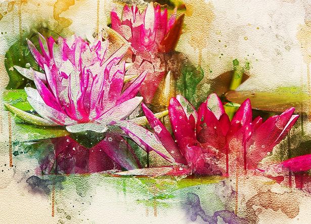 waterlily-3163302_edited.jpg