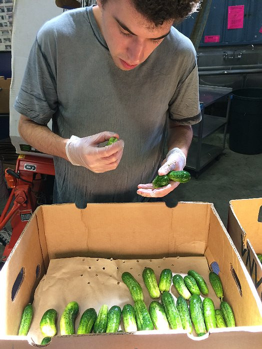 Image of Connor, wearing a gray t-shirt, sorting through cucumbers at the Food Bank.