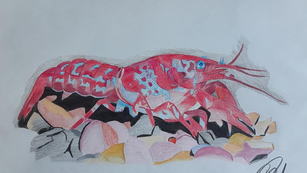 Super Red Crayfish Print
