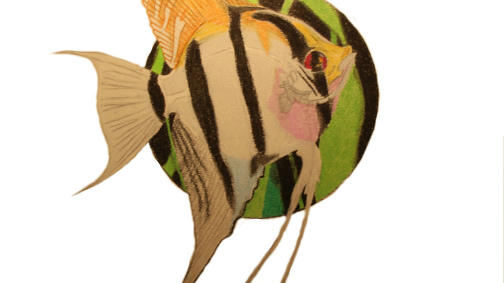 Eimekei Angelfish Print