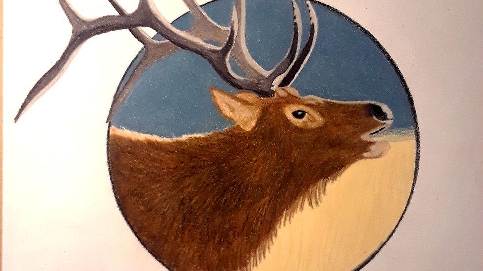Bull Elk Calling Print