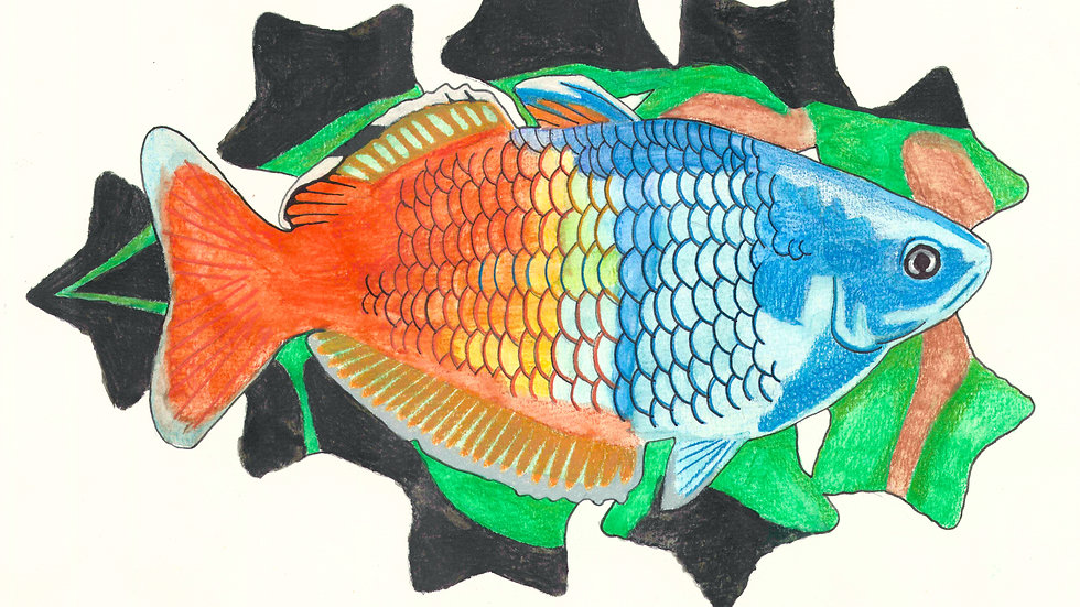Bosemani Rainbowfish WC Print