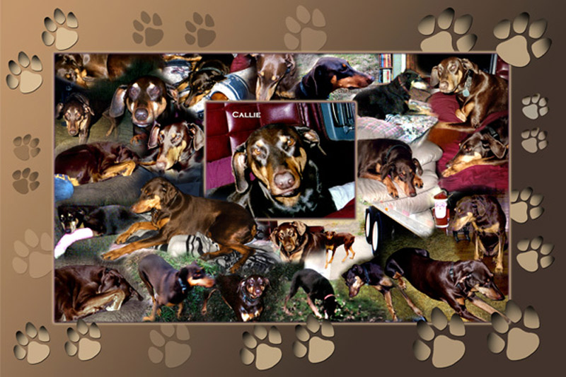 Favorite pet photo montage, collage