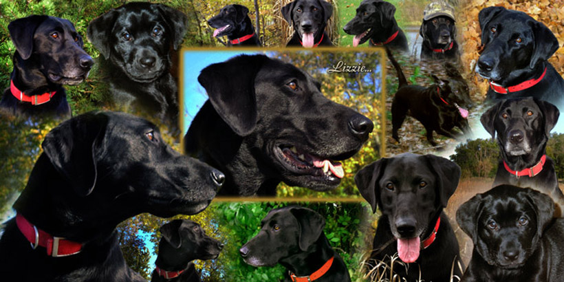 Pets & animals photo montage