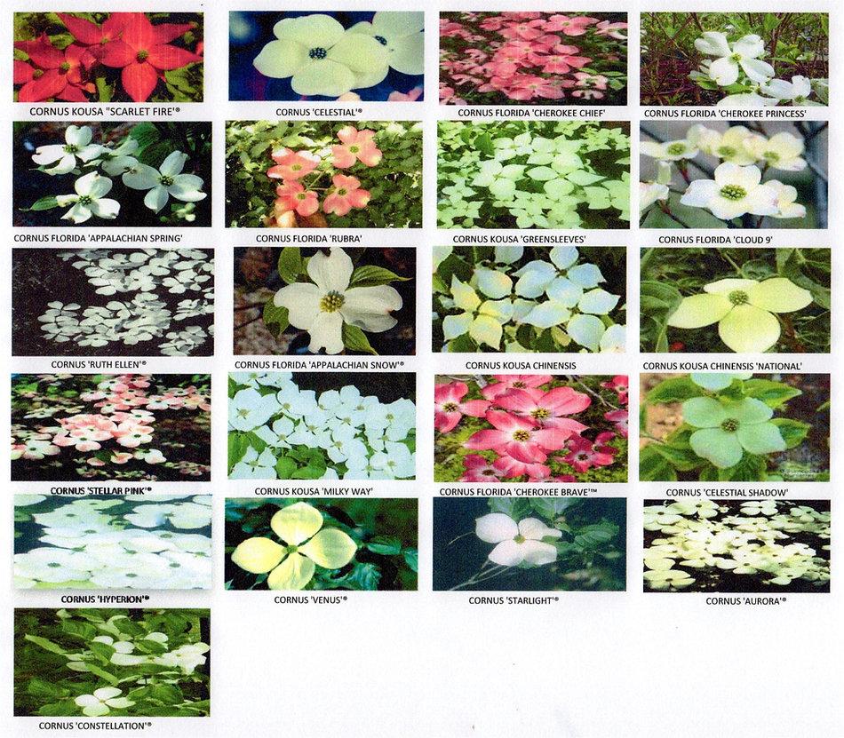 selection pic.jpg