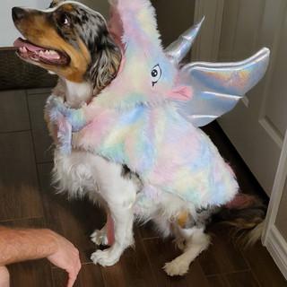 Puppy_Halloween.jpg