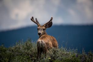 25% of UK mammals facing extinction