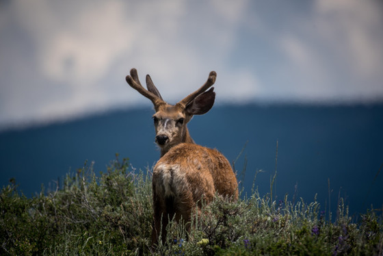 DMV and DEC warn motorists to watch for deer and moose on or near roadways