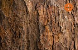 Comment choisir l'ossature bois ?