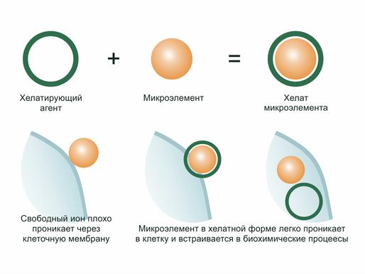 Роль хелатных соединений микроэлементов