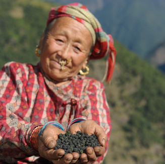 Old Nepali Woman shows Pipla Chabo