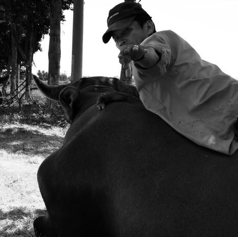 Man on buffalo.jpg