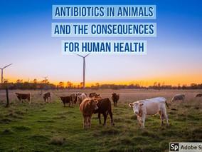 Antibiotics and animals - Lesson 102