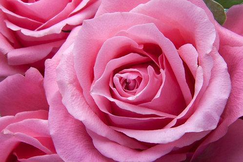 Pink Rose Sponsor
