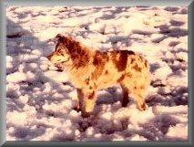 70_martins_red_fudge_snow_framed
