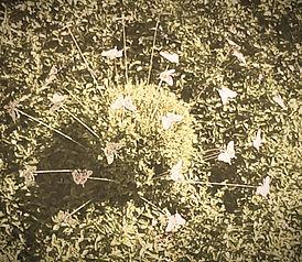 werkoase romantische Gartendeko