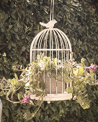 Werkoase  Vogelkägig