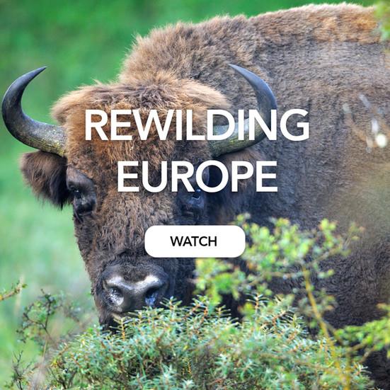 Thumbnail rewilding.jpg