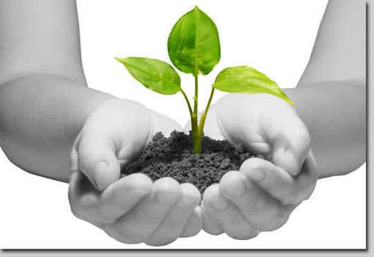 Herbal Medicine Creation