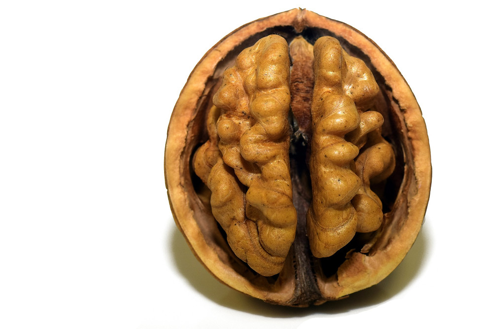 walnut half