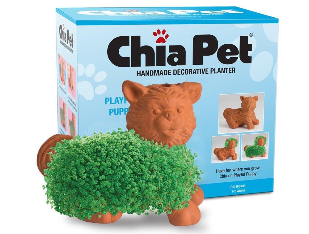 Chia Pet