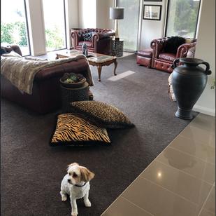 Tuftmaster Carpets / St Helier