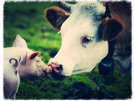 Nourish! Guide to veganism