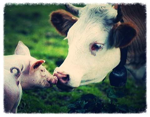 kind+animals_edited.jpg