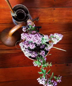 Distilling summer medicinals grown in the garden, oregano has such beautiful blooms!_#essentialoils