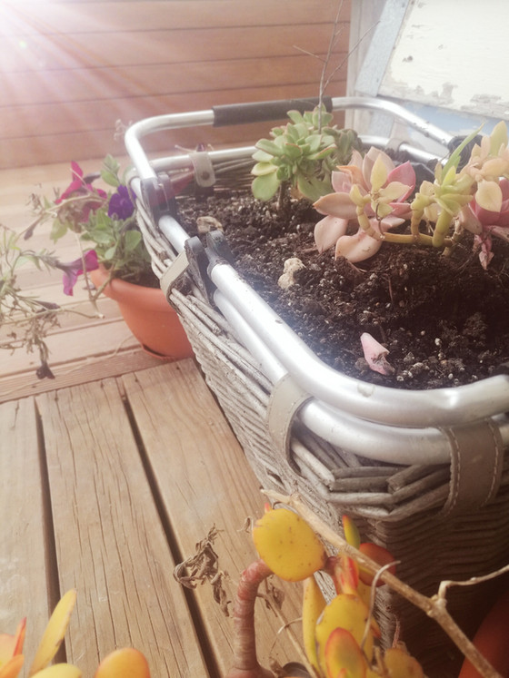 recycling a basket, into a planter.
