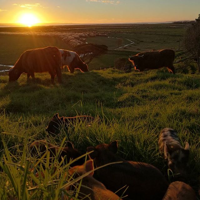 Friday night farm life!_#nofilter#farm#farmlifebestlife#sustainableliving#workplace#piglets#highland
